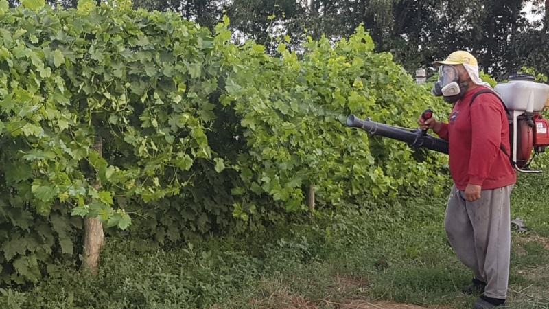 Обробка виноградника