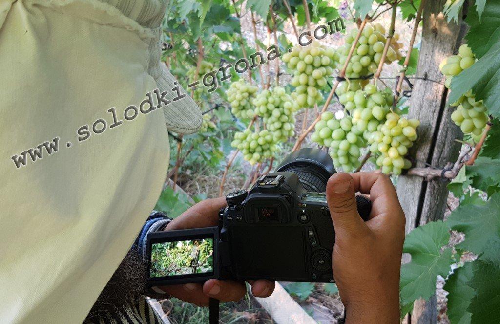 Виноградний фотокореспондент )))