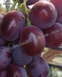 виноград Альянс