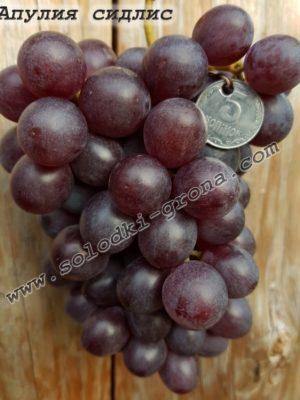 виноград Апулія