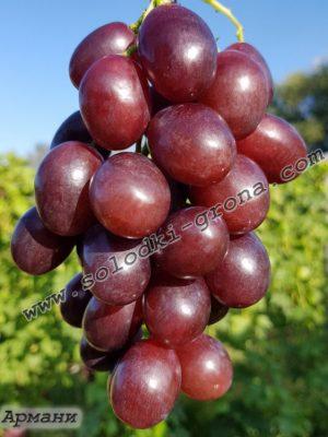 виноград Армані