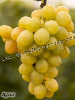 виноград Арні