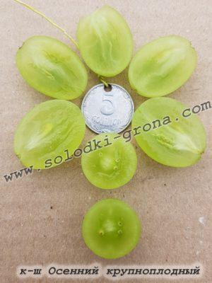 виноград Осінній крупноплідний