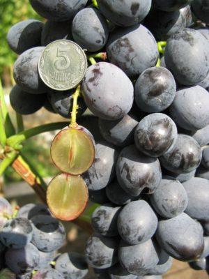 виноград Отем роял
