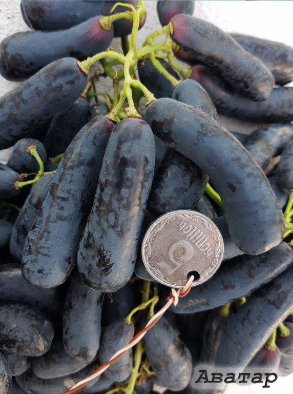 виноград Аватар