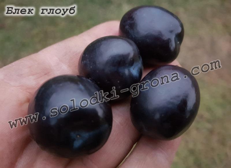 виноград Блек глоуб