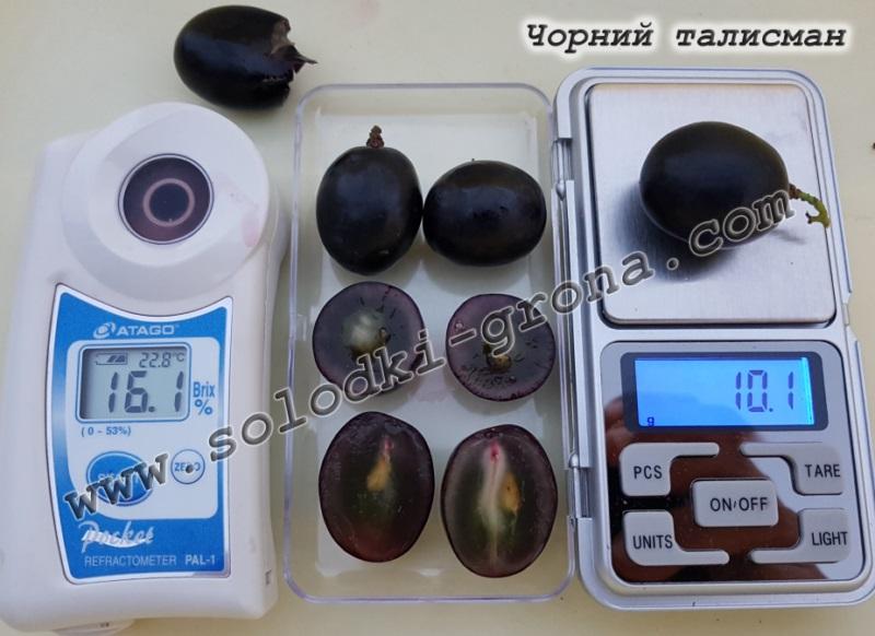 виноград Чорний талісман