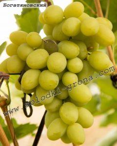 виноград Богатяновський
