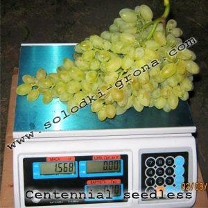 виноград Сентен'єл сідліс