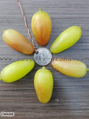 виноград Сінді