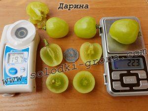 виноград Дарина