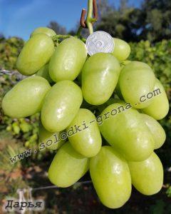 виноград Дар'я