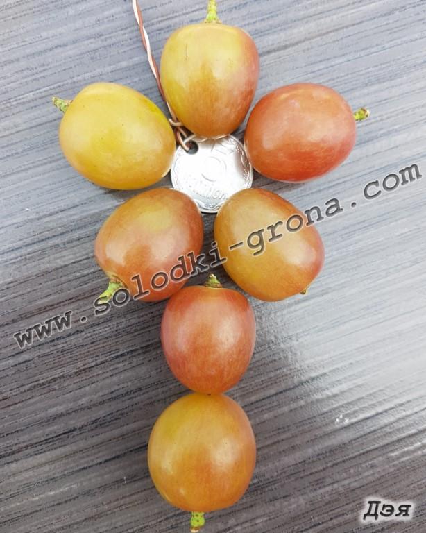 виноград Дея