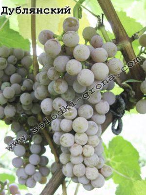 виноград Дублянський