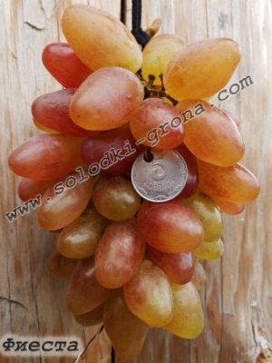 виноград Фієста