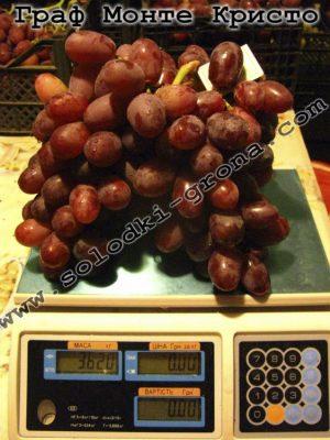 виноград Граф Монте Крісто