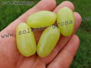 виноград Геліодор