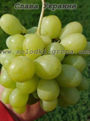 виноград Слава Україні
