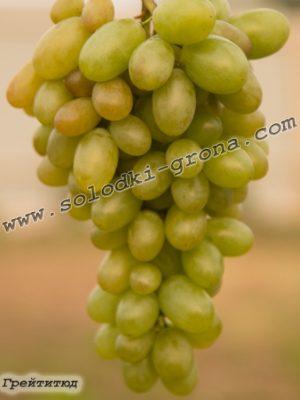 виноград Грейтитюд