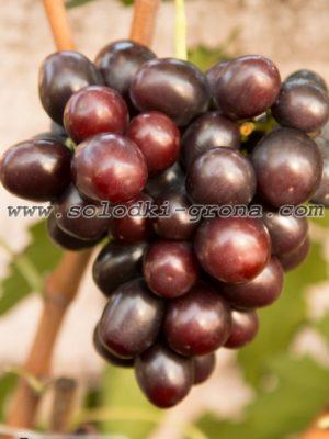 виноград Арлекін