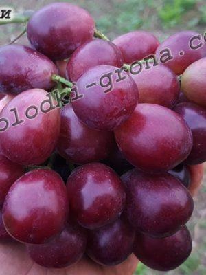 виноград Хайбейлі