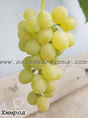 виноград Хімрод