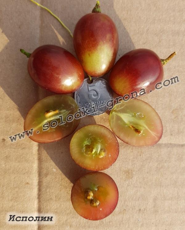виноград Ісполін