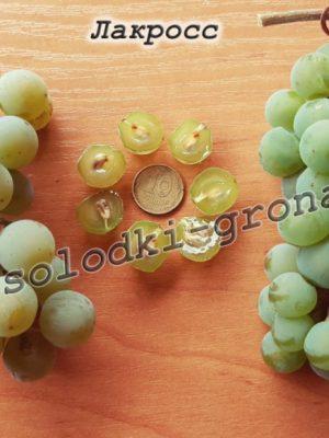 виноград Лакросс
