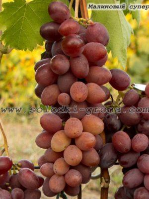 виноград Малиновий супер