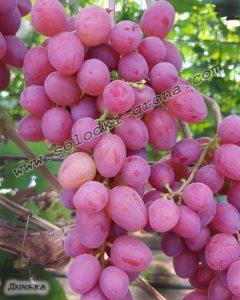 виноград Динька