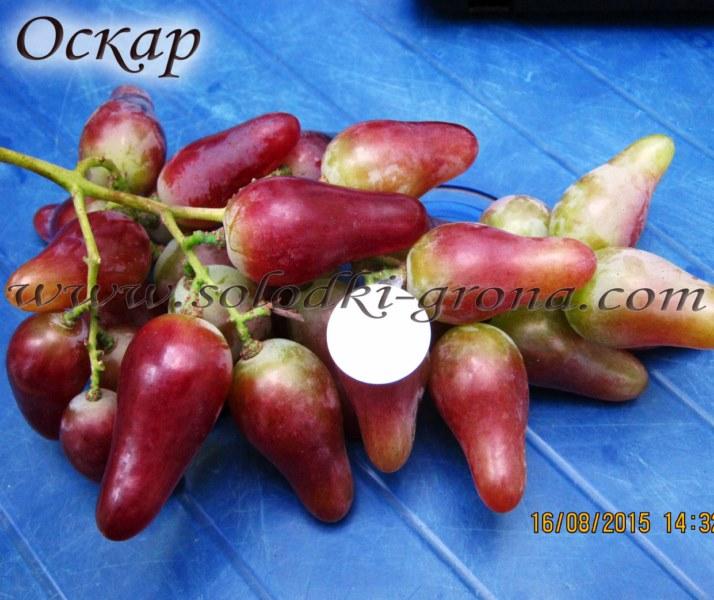виноград Оскар