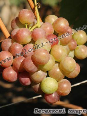 виноград Веселкові хмари