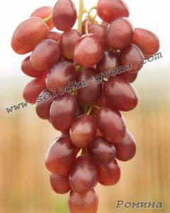 виноград Роміна