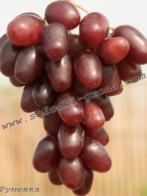 виноград Румейка