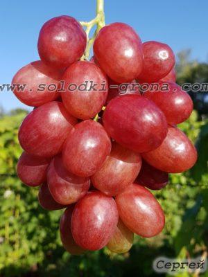 виноград Сергій