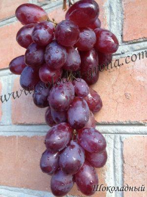 виноград Шоколадний