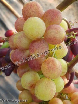 виноград Смішарики