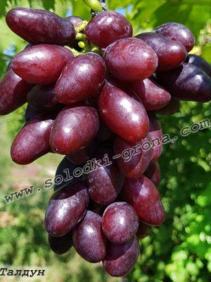 виноград Талдун