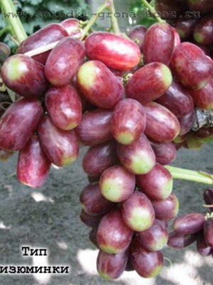 виноград Тип ізюминки