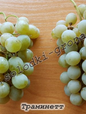виноград Трамінетт / Traminette