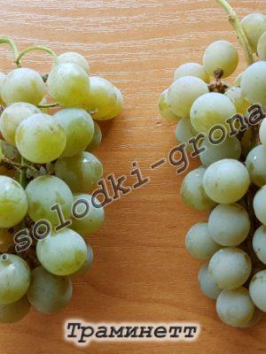 виноград Трамінетт