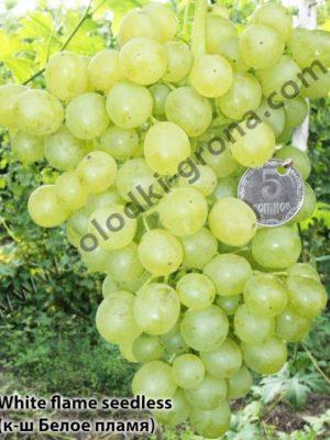 виноград Вайт флейм