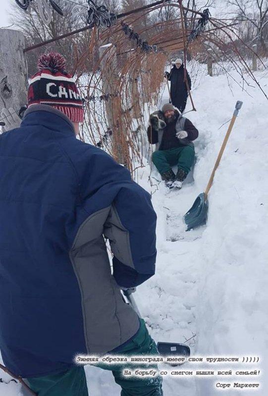 Зимова обрізка винограду