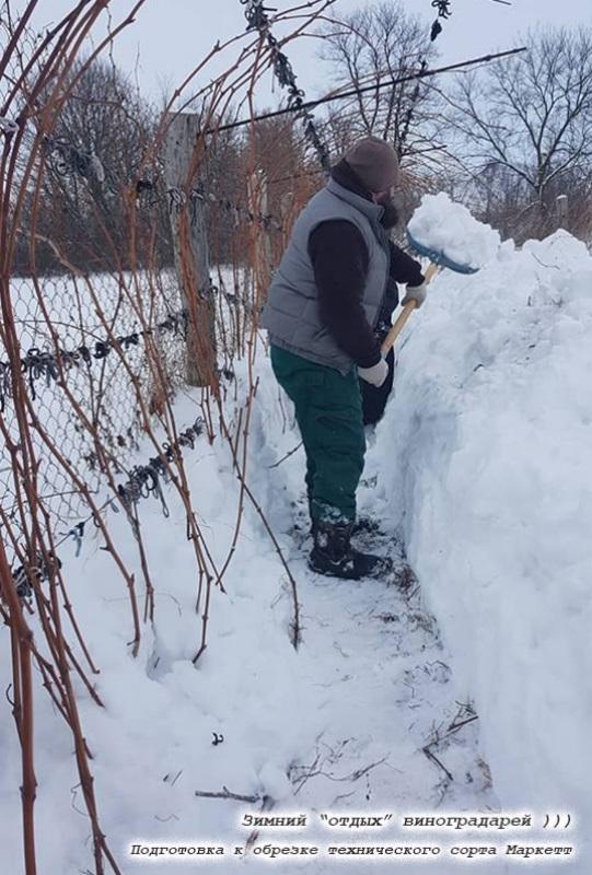 Зимова обрізка виноградника