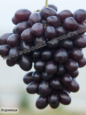 виноград Зорніца