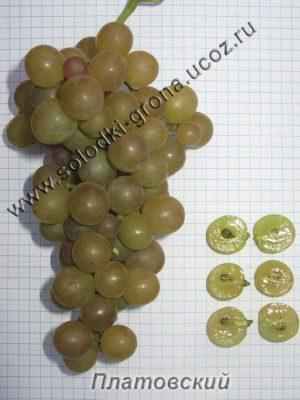 виноград Платовський / Platovsky