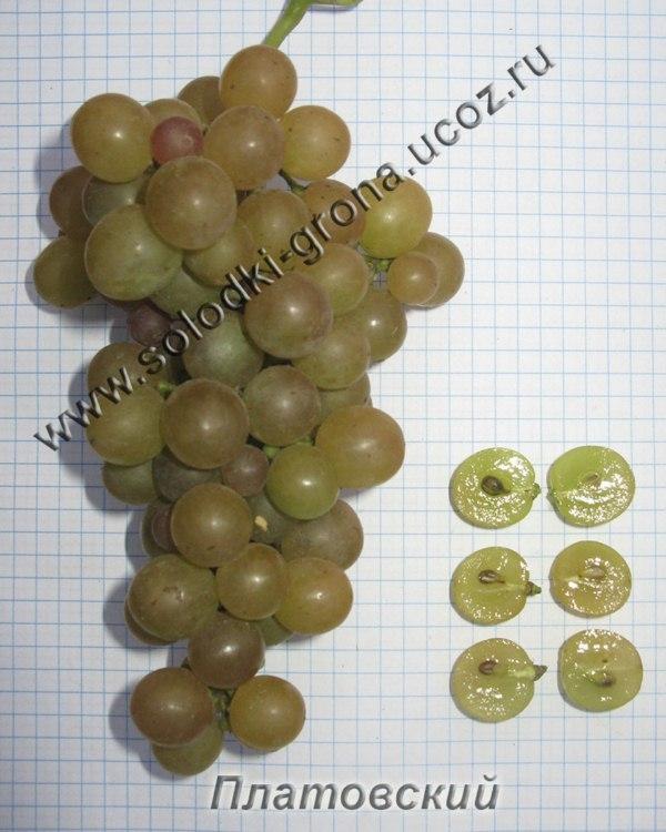 виноград Платовський