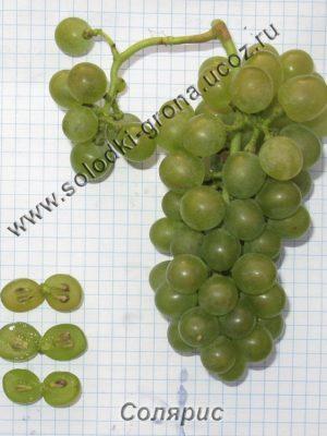 виноград Соляріс