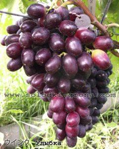 виноград Вінк