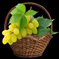 безнасінні сорти винограду